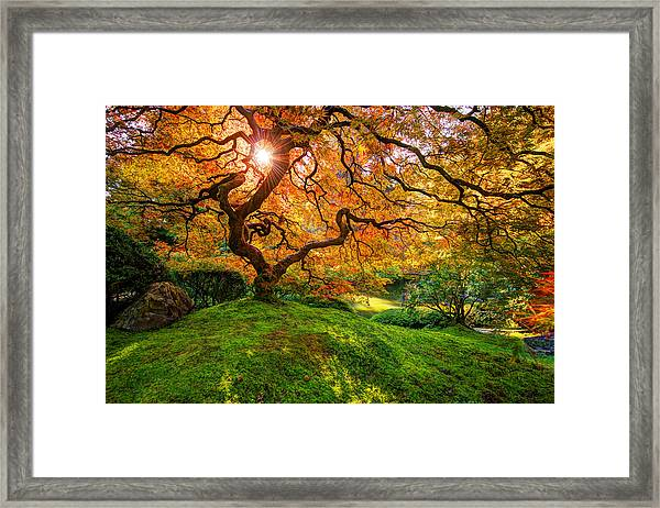Framed Print featuring the photograph Maple  by Dustin  LeFevre