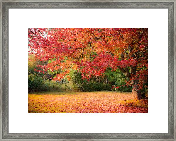 Maple In Red And Orange Framed Print