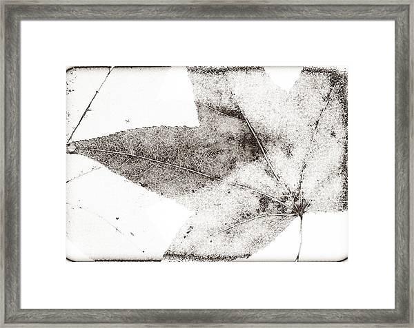 Maple Leaf Nature 1 Macro  Image Art Framed Print