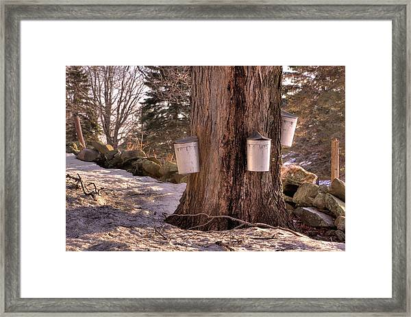 Maple Syrup Buckets Framed Print