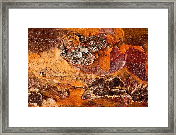 Maple Tree Bark Framed Print