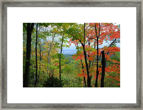 Maples Against Lake Superior - Tettegouche State Park Framed Print