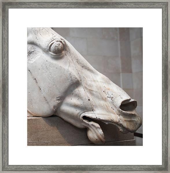 Marble Equus Framed Print