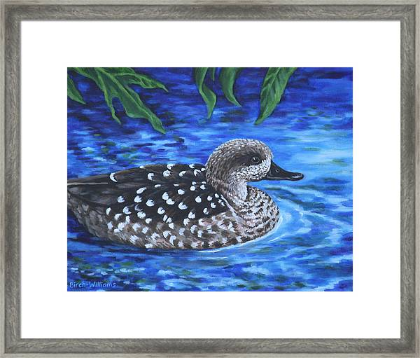 Marbled Teal Duck On The Water Framed Print