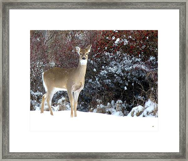 March Snow And A Doe Framed Print