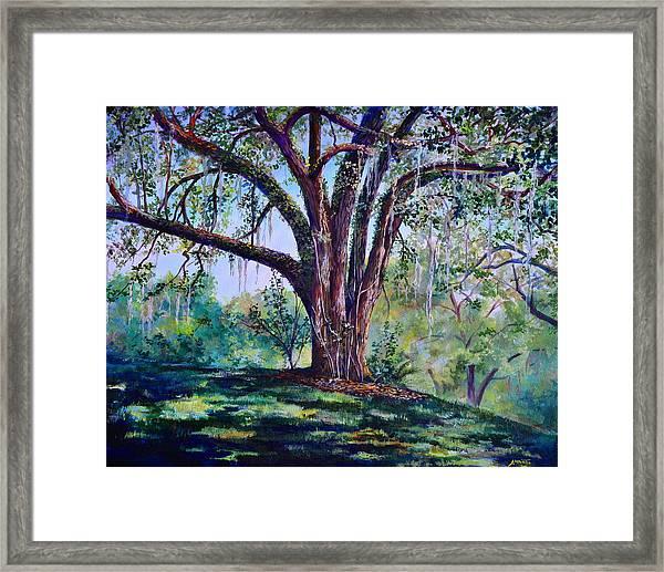 Marcus Oak Framed Print