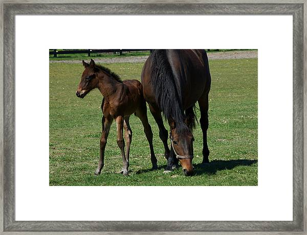 Mare And Her Foal 1 Framed Print