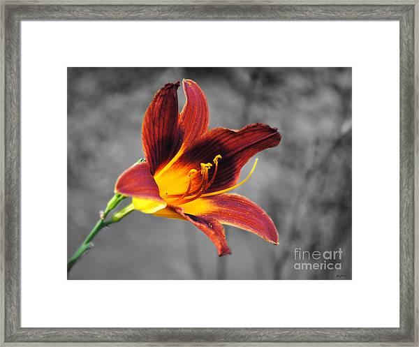 Margo's Lily Framed Print