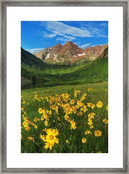 Maroon Summer Framed Print
