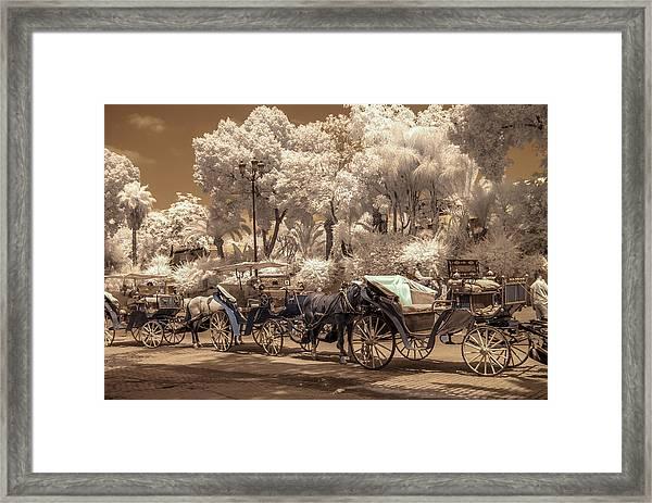 Marrakech Street Life - Horses Framed Print