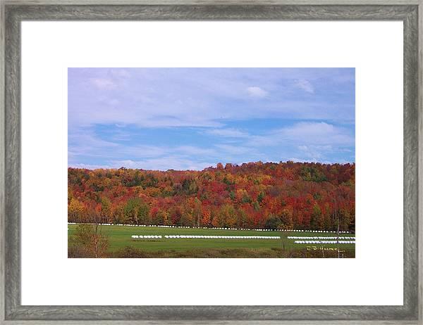 Marshmallows Framed Print
