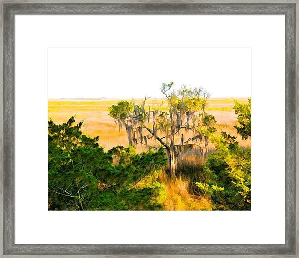 Marsh Cedar Tree And Moss Framed Print