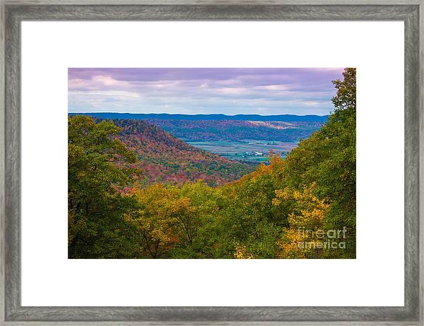 Martin Hill Foliage Framed Print