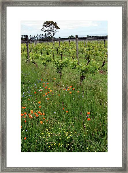 Martinborough Vineyard And Cellar Door Framed Print