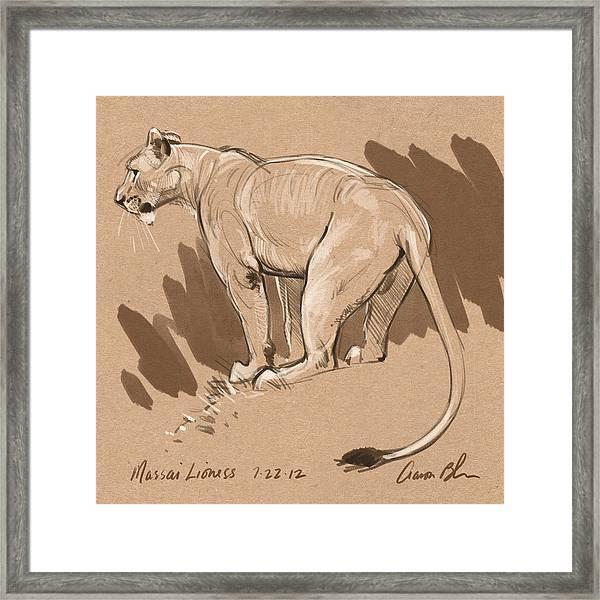 Masai Lioness Framed Print