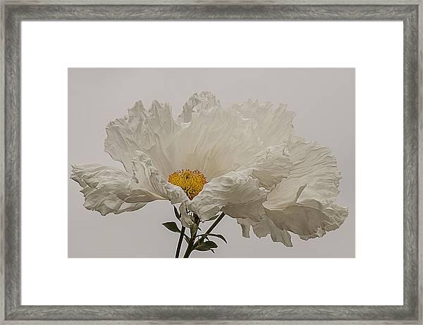 Matilija Poppy White On White Framed Print