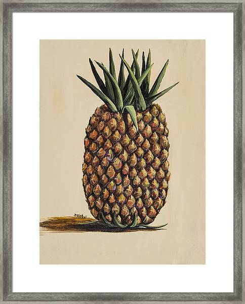 Maui Pineapple 3 Framed Print
