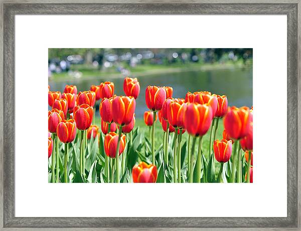 May Day Framed Print