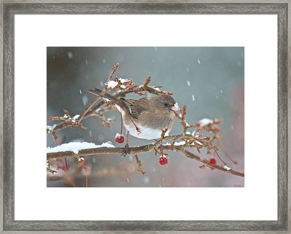 Maybe A Cherry Or Maybe Not Framed Print