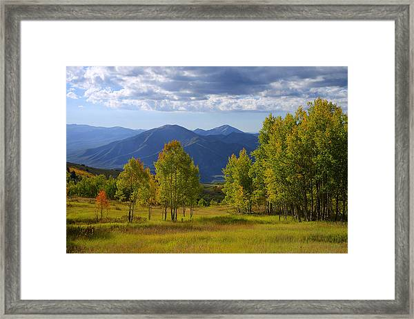 Meadow Highlights Framed Print