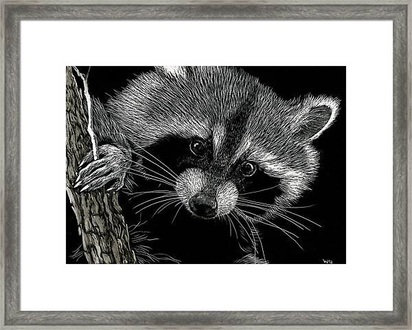 Meeko Framed Print