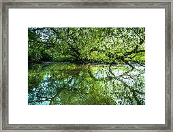 Meeting A Willow Tree In The Evening Framed Print