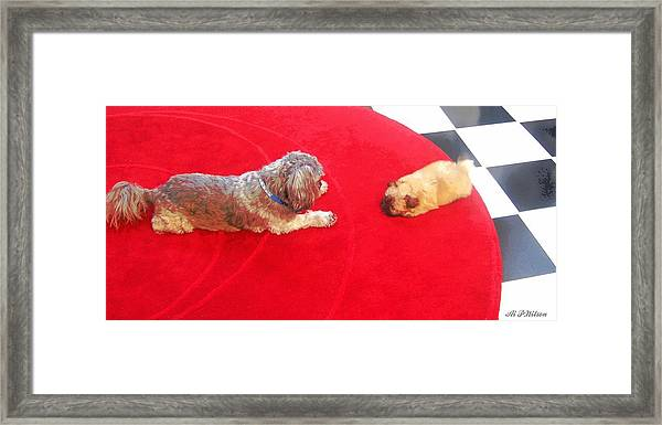 Dog And Puppy Pet Photography Lhasa Apso Shih Tzu Pomeranian   Framed Print