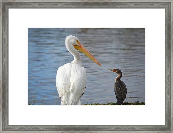 Meeting Of Beaks Framed Print