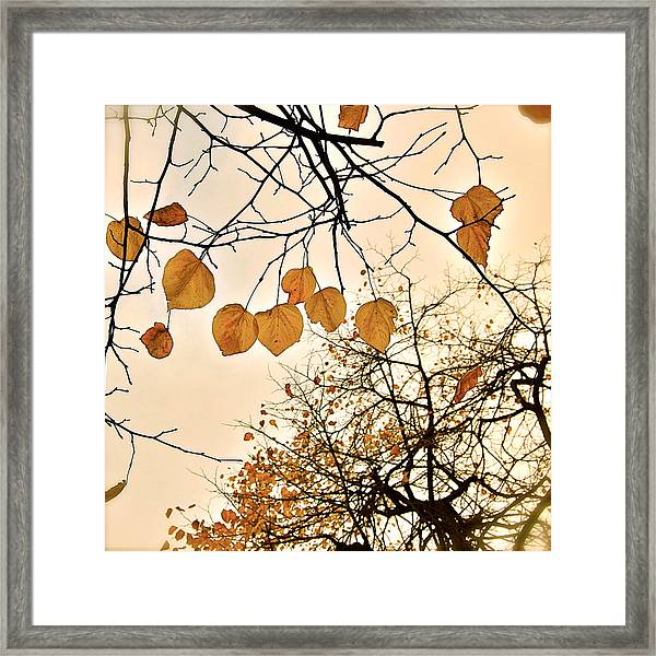 Framed Print featuring the photograph Mellow Touch by HweeYen Ong