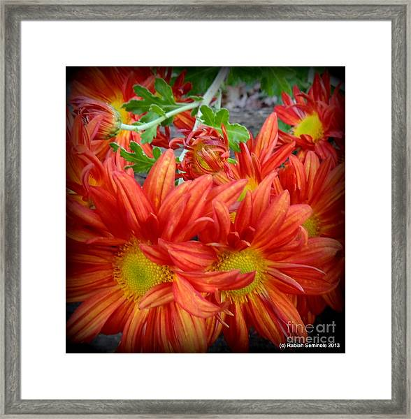 Memories Of Carols Garden Framed Print