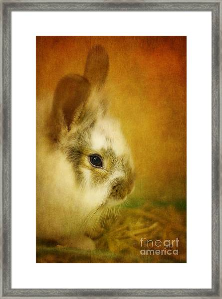 Framed Print featuring the photograph Memories Of Watership Down by Lois Bryan