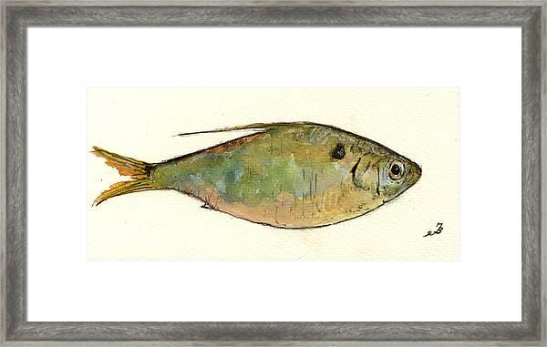 Menhaden Fish Framed Print