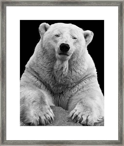 Mercedes The Polar Bear Framed Print