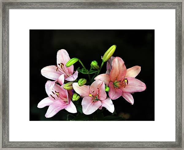Merlot Lilies Framed Print