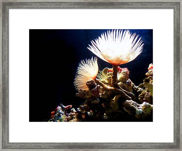 Mermaid's Playground Framed Print