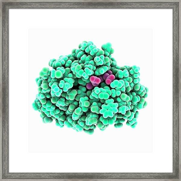 Methaemoglobin Molecule Framed Print