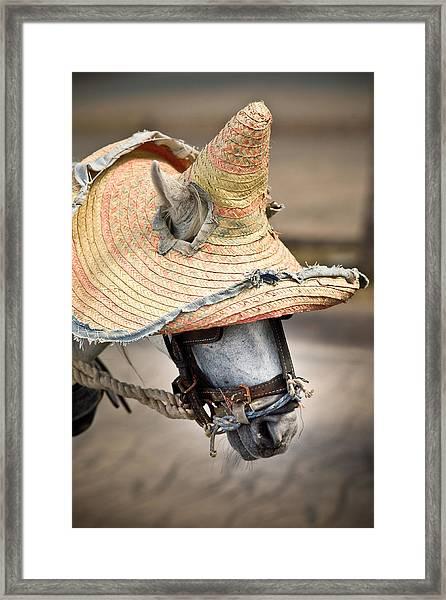 Mexican Burro Framed Print