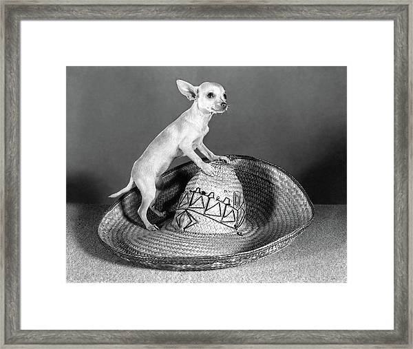 Mexican Chihuahua Standing On Top Framed Print
