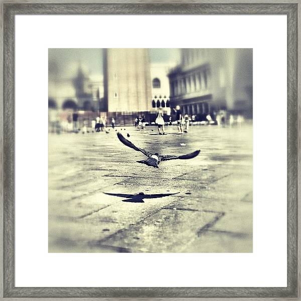 #mgmarts #bird #nature #flying #fly Framed Print