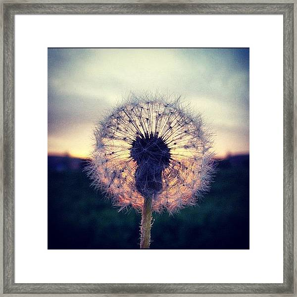 #mgmarts #dandelion #sunset #simple Framed Print