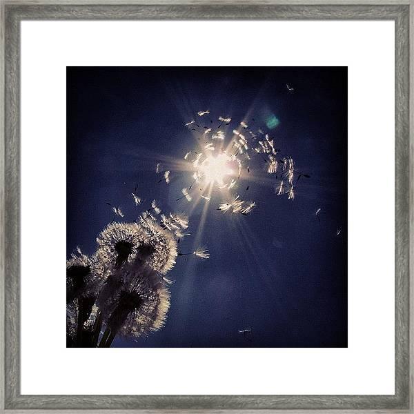 #mgmarts #dandelion #wish #makeawish Framed Print
