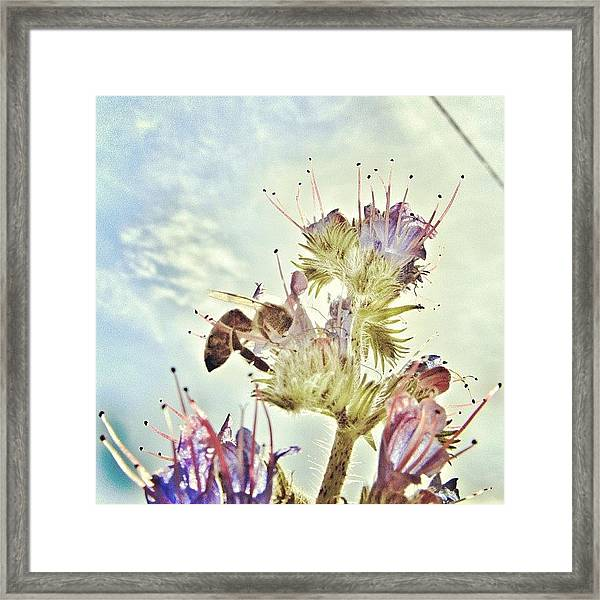 #mgmarts #flower #spring #summer #bee Framed Print
