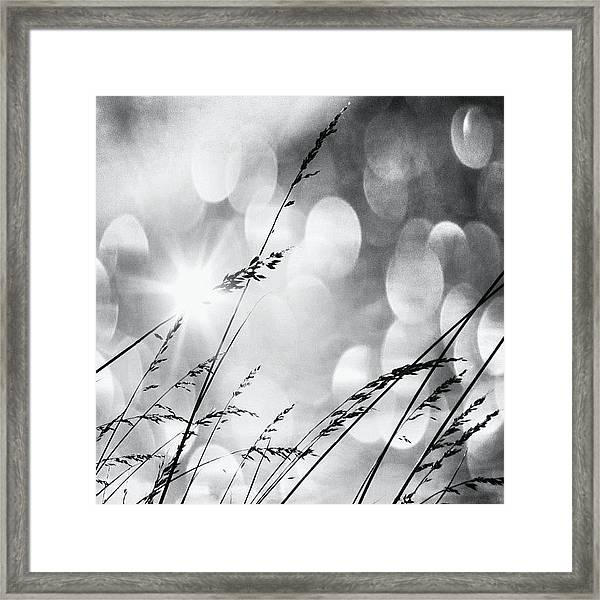 #mgmarts #grass #weed #wind #field Framed Print
