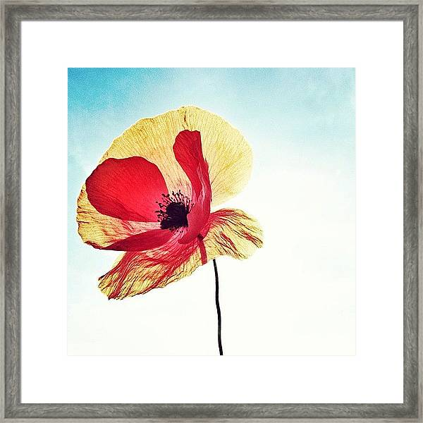 #mgmarts #poppy #nature #red #hungary Framed Print