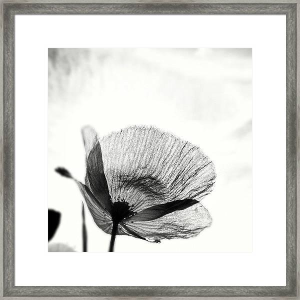 #mgmarts #poppy #summer #spring #sunny Framed Print