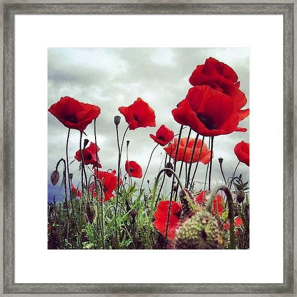 #mgmarts #poppy #weed #flower #spring Framed Print