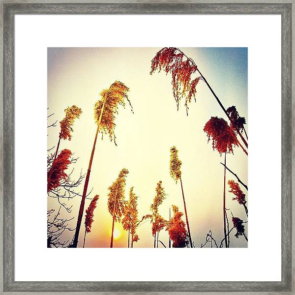 #mgmarts #sunset #bright #beautiful Framed Print