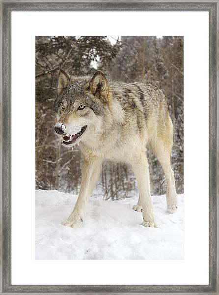 Micah  Framed Print