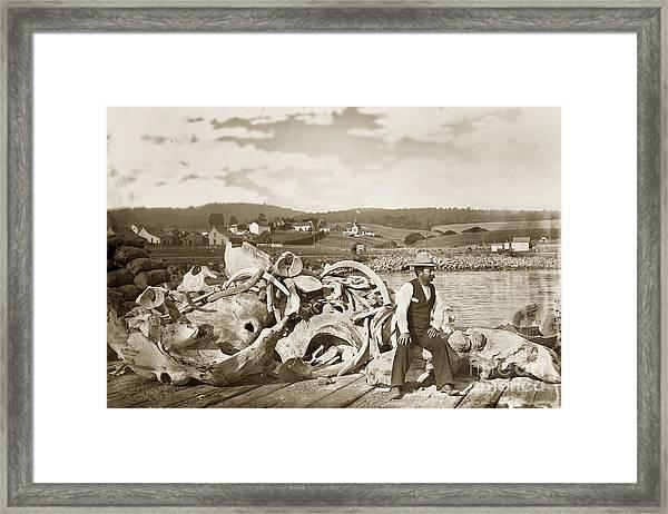 Michael Noon Sitting On A  Pile Of Whale Bones Monterey Wharf  Circa 1896 Framed Print