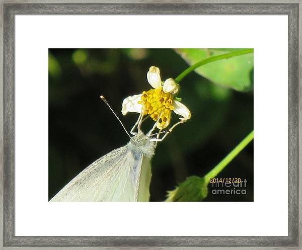 Micro Photography Framed Print